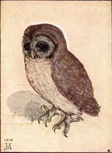 20090706135410!Durer-owl